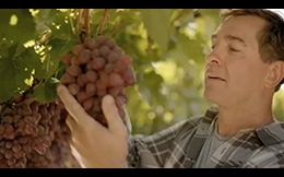California Grapes Commercial
